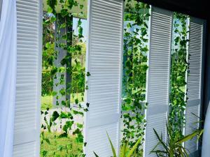 Screens-ivy
